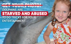 boycott the dolphin show