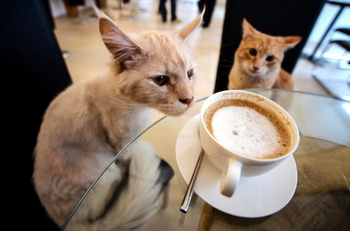 Beirut Cat Café