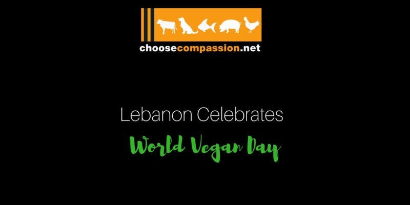 Choose compassion - Lebanon Is Finally Opening Up To Veganism!