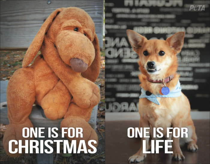 One-Is-For-Christmas-One-Is-For-Life-PETA