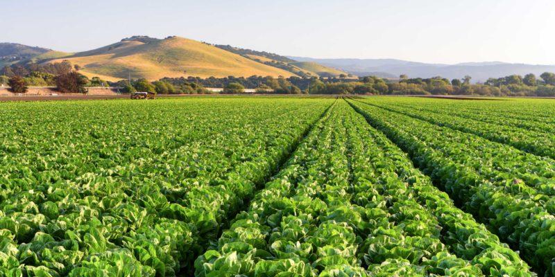 Veganic Agriculture: The Cruelty Free Alternative