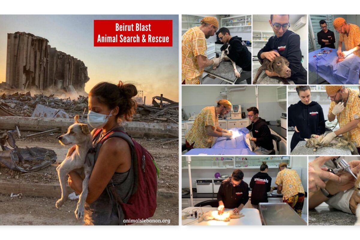 Animals Lebanon have worked round the clock to help animals affected by Beirut explosion.