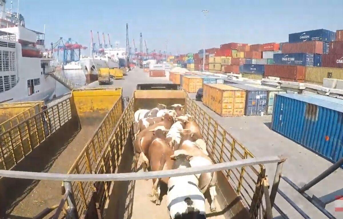live export Lebanon from Brazil