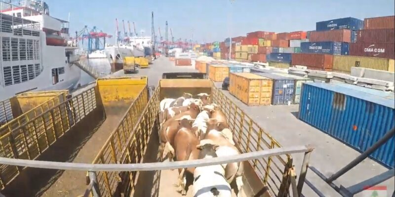 live export Lebanon from Brazil
