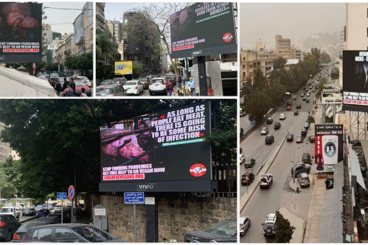 Lebanese Vegans Urges People To Stop Funding Pandemics In Their First Billboard Ads Campaign